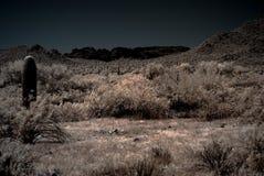 saguaros лунного света пустыни Стоковое Изображение RF