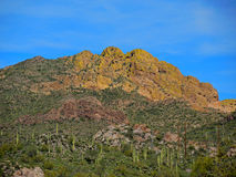 Saguaros Back of the Ridge Stock Image