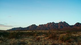 Saguaros bei Sonnenuntergang vor Aberglaube-Bergen Sonora-Wüste nahe Phoenix lizenzfreies stockbild