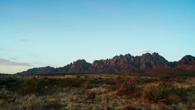 Saguaros bij Zonsondergang voor Bijgeloofbergen Sonoranwoestijn dichtbij Phoenix stock fotografie
