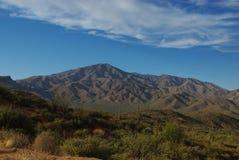 Saguaros and mountains, Arizona Royalty Free Stock Image