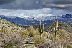 Saguaros och snöig berg Royaltyfri Foto