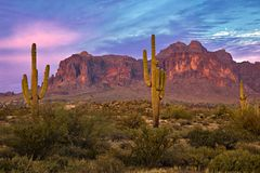 Superstition Mountains. Saguaros at Sunset in Sonoran Desert near Phoenix royalty free stock photo