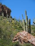 Saguaros wie eine Statue stockfotos