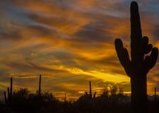 Saguaroschaduwen en trillende gele zonsonderganghemel van de Zuidwestenwoestijn Royalty-vrije Stock Foto