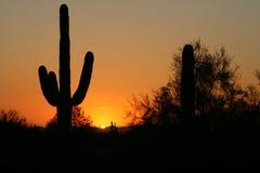 saguarosihlouette Arkivfoton