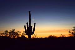 Saguarosolnedgång Arkivfoto