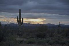 Saguarosolnedgång i Arizona royaltyfria bilder