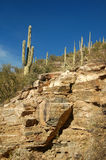 Saguarro cactus march up the rocky cliff in southern Arizona. Desert with clear blue sky stock image