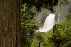 Sahalie Falls McKenzie River National Recreation Trail Nature Landscape Royalty Free Stock Photo