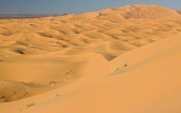 Sahara öken Arkivbild