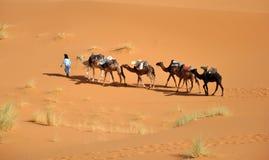 Sahara stock images