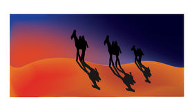 Sahara. Three camels wandering in the desert at sunset Royalty Free Stock Image