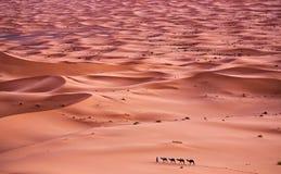 Sahara obraz royalty free