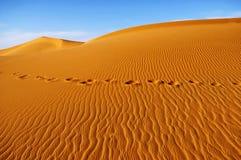 Sahara Obrazy Royalty Free