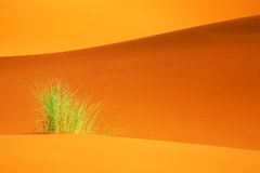 Sahara abstract landscape Royalty Free Stock Images