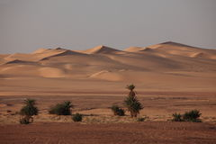 The Sahara in Algeria Royalty Free Stock Images