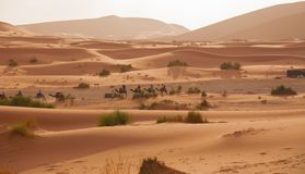 Sahara Stock Photography