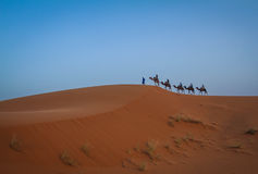 Sahara, Camel caravan Royalty Free Stock Images