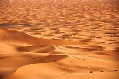 Sahara. Camel caravan going through the sand dunes in the Sahara Desert, Morocco royalty free stock image