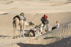Sahara Camels Fotografie Stock