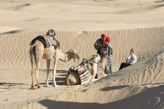 Sahara Camels Stock Photos