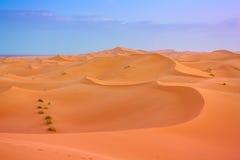 Sahara-Dünen Stockfotografie