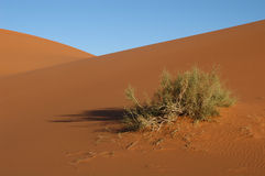 Sahara Desert. The sand dunes of Erg Chebbi in the Sahara Desert in Morocco Stock Image