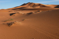 Sahara Desert. The sand dunes of Erg Chebbi in the Sahara Desert in Morocco Royalty Free Stock Photo