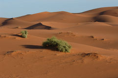 Sahara Desert. The sand dunes of Erg Chebbi in the Sahara Desert in Morocco Royalty Free Stock Photography