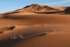 Sahara Desert. The sand dunes of Erg Chebbi in the Sahara Desert in Morocco stock photo