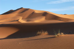 Sahara Desert. The sand dunes of Erg Chebbi in the Sahara Desert near Merzouga, Morocco Royalty Free Stock Images
