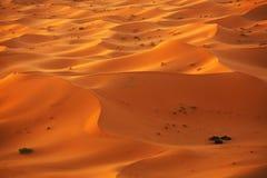 Sahara Desert Royalty Free Stock Image