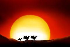 Sahara Desert. Lonesome Animals in a sunset of the sahara desert Royalty Free Stock Image