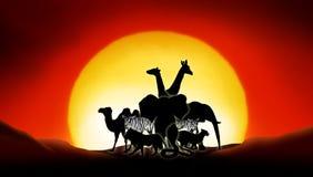 Sahara Desert. Lonesome animals in a sunset of the sahara desert Stock Photography