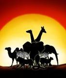 Sahara Desert. Lonesome animals in a sunset of the sahara desert Stock Image