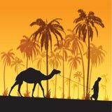 Sahara desert. Sahara, camel, palm and arabian lifestyle illustration Royalty Free Stock Photo