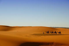 Sahara Desert. Camel caravan going through the Sahara Desert, Morocco Royalty Free Stock Image