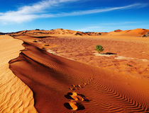 Sahara Desert, Algeria. Single tree in Sahara Desert, Algeria Royalty Free Stock Image