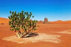 Sahara Desert, Algeria. Single tree in Sahara Desert, Algeria Royalty Free Stock Photos