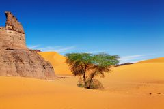 Sahara Desert, Algeria. Sand dunes of Sahara Desert, Algeria Royalty Free Stock Photos