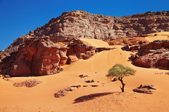 Sahara Desert, Algeria Royalty Free Stock Images
