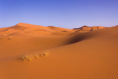 Sahara desert. A big dune in the desert near Merzouga Morocco stock photography