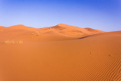Sahara desert. A big dune in the desert near Merzouga Morocco royalty free stock photography