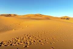 Sahara Desert with blue sky in Morocco, Africa royalty free stock images
