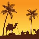 Sahara desert and camels. Sand dune and camel illustration. Arabian lifestyle Stock Image