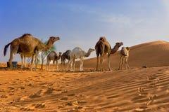 Sahara Desert com os camelos em Tunísia fotografia de stock