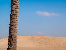 Sahara desert at Douz in Tunisia. In the golden light of dawn Royalty Free Stock Images