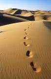 Sahara Desert. Dunes of Erg Chebbi in Morocco Stock Photography