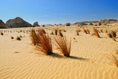 Sahara Desert, Egypt Royalty Free Stock Photography